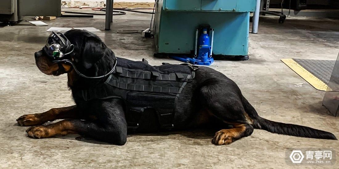 美军军犬获得AR护目镜原型,使执行侦察任务更安全